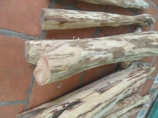 giá gỗ sưa non