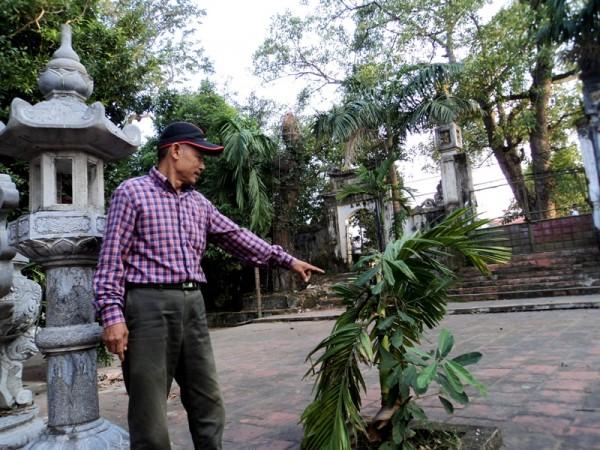 cây cối xung quanh bị ảnh hưởng vụ trộm gỗ sưa đỏ