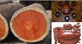 gỗ sưa dùng làm gì, giá trị thực của gỗ sưa, gỗ trắc, gỗ huỳnh đàn, gỗ huê
